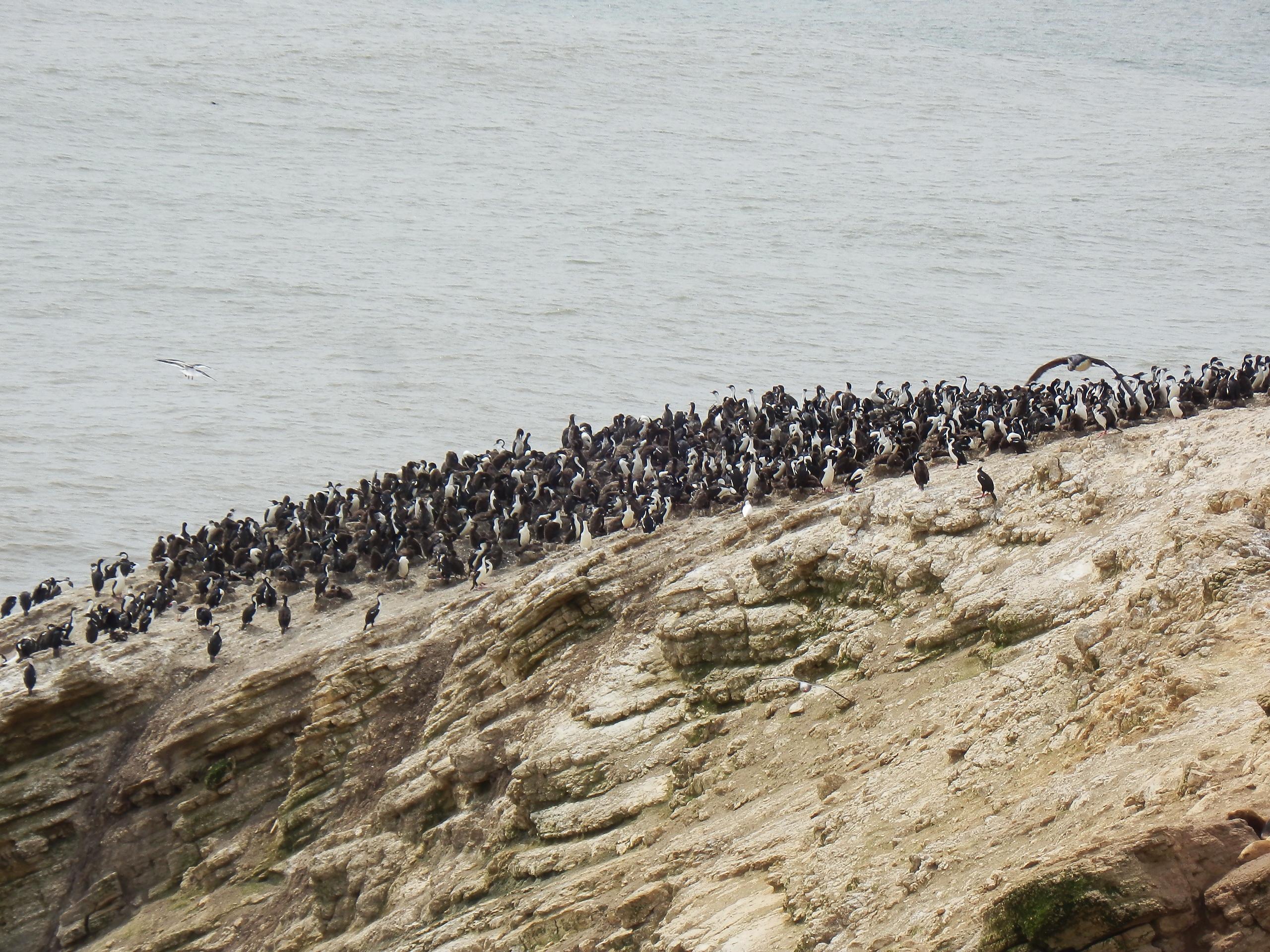 Península de Mitre, Argentina. Foto: Leonardo Collado