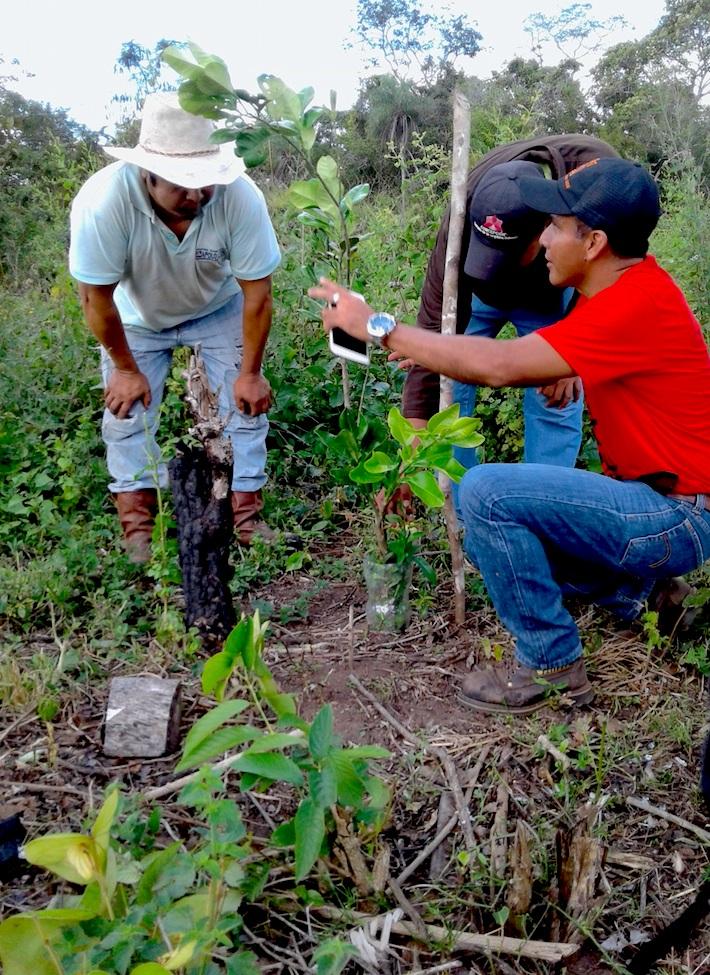 Comunarios de Concepción aprender a plantar los árboles. Allí reforestaron 150 hectáreas. Foto: APMT.