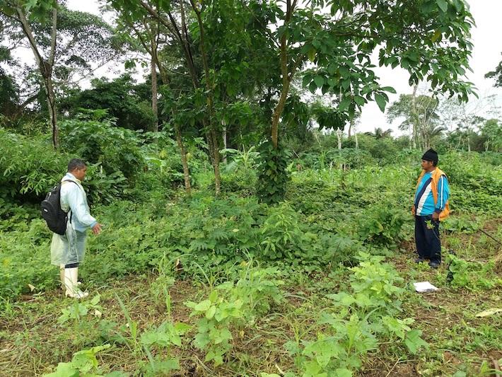 Comunarios de San Buenaventura en uno de los predios donde implementaron un sistema agroforestal. Foto: APMT.