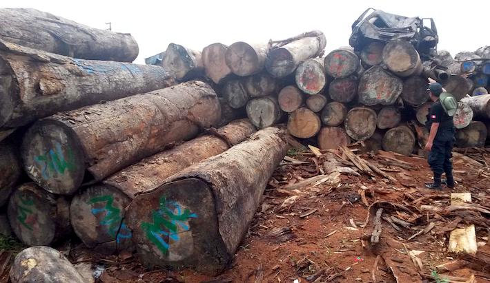 Una parte importante de la madera que arribó a Tampico fue exportada por la empresa peruana Inversiones La Oroza. Foto: Archivo Ojo Público.