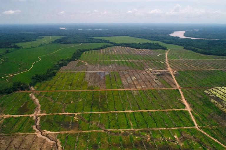 Palmas del Huallaga es una empresa de reciente creación que ha adquirido casi 1900 hectáreas de lotes en San Martín. Una organización no gubernamental y comuneros de la zona denuncian que la deforestación bordea el 27%. Foto: Diego Pérez