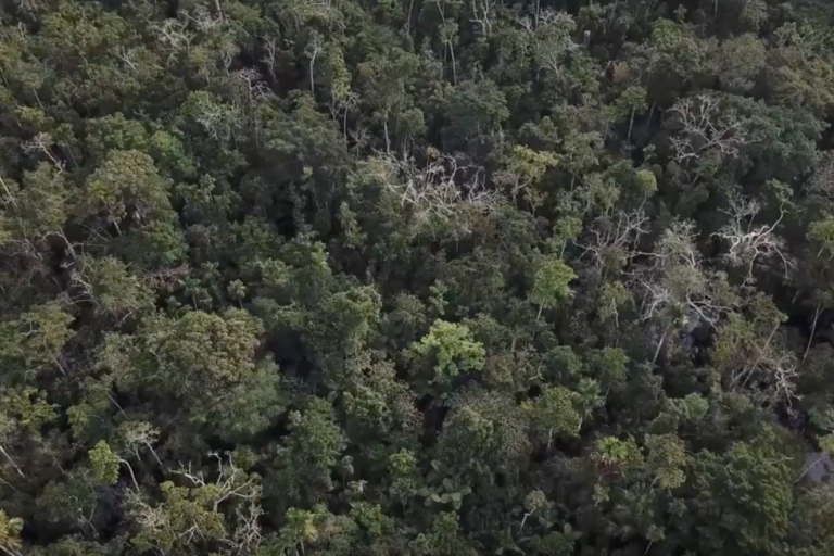 Algunos regentes forestales elaboran planes de manejo de los bosques con información falsa. Foto: Rainforest Foundation US.