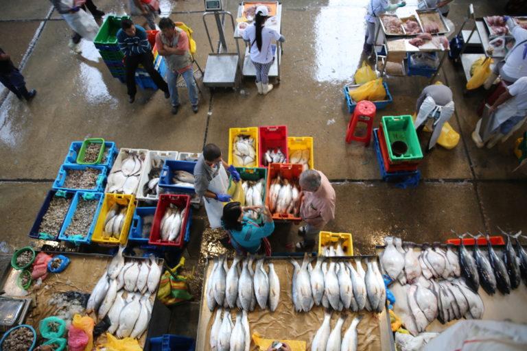 La sustitución de especies se presenta en mercados, supermercados y restaurantes Foto: Oceana