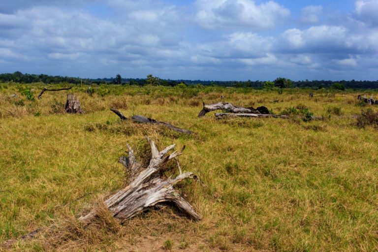 La deforestación también afecta a las áreas naturales protegidas. Foto: Imazon.
