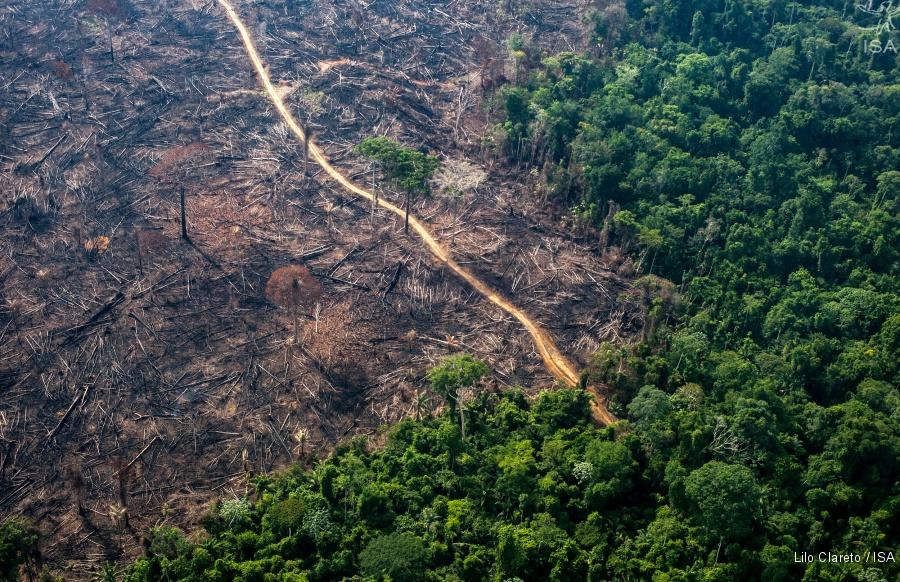 Resultado de imagen para deforestación