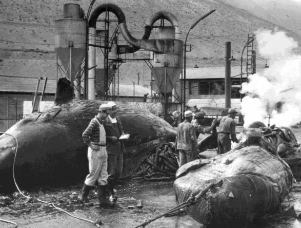 Biólogos en la plataforma donde se descuartizaban a las ballenas. Foto: Archivo Obla Paliza.