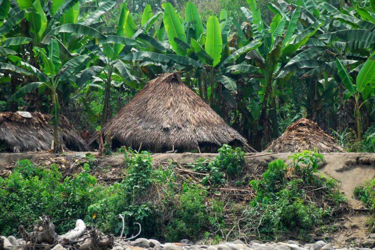 En medio de la selva peruana, habitan al menos 12 etnias de indígenas en aislamiento voluntario o contacto inicial. Prefieren el no contacto y la autodeterminación. Crédito: INDEPA.