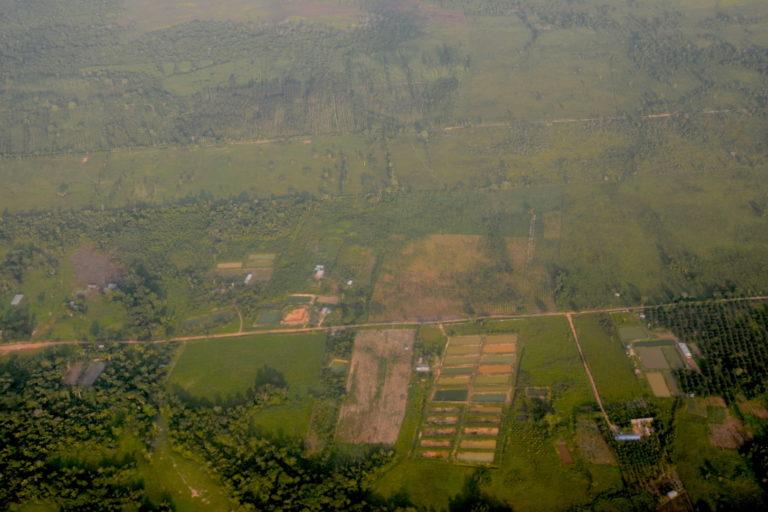 Cultivos de arroz en la zona de Nueva Requena. Aún se aprecia árboles alrededor. Foto: Yvette Sierra Praeli.