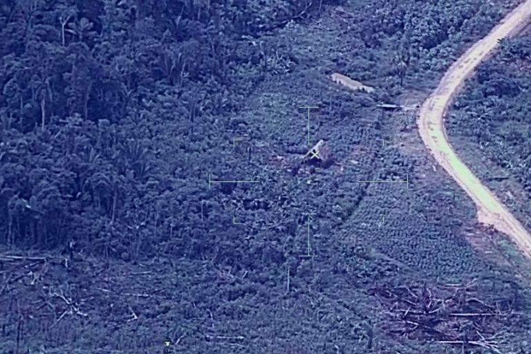 Zonas deforestadas y que se han convertido en campo de cultivo junto a una carretera en la zona de Nueva Requena. Foto: CEVAN / FAP