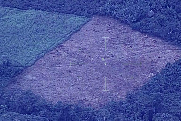 Un área recién desboscada junto a un cultivo en medio del bosque. Foto: CEVAN / FAP.