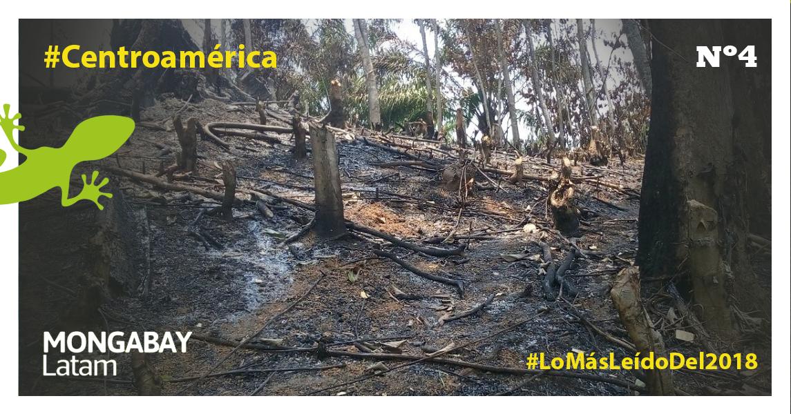 Restos de incendio en el Refugio Mico Quemado. Pocos árboles quedan en pie. Foto: Rubén Escobar.