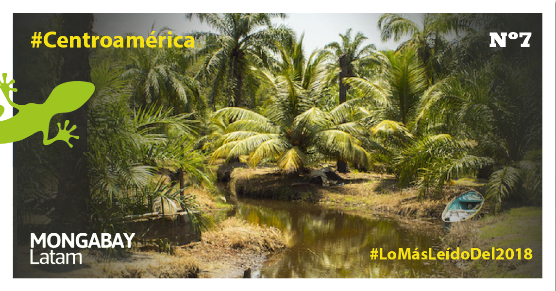 Muelle rodeado por árboles de palma aceitera. Foto: Jessica Guifarro.