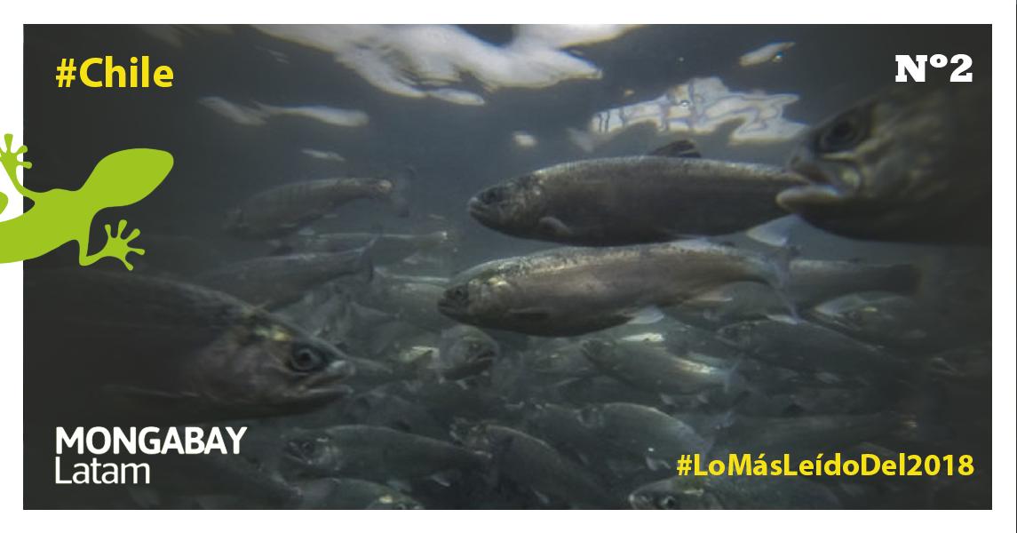 Cultivos de salmones. Foto: WWF Chile – Meridith Kohut.