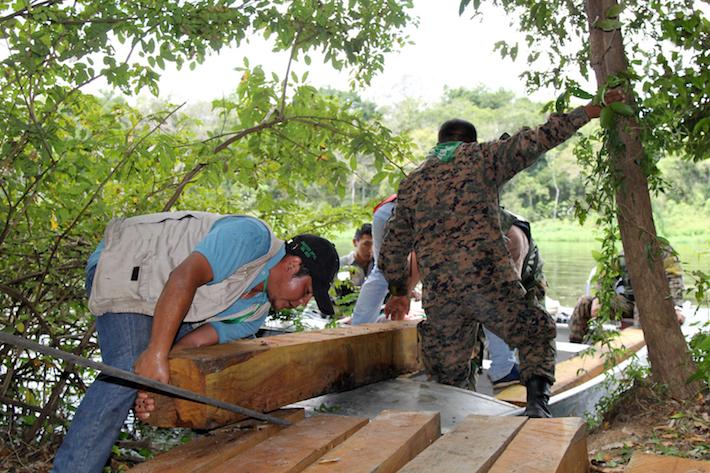 El tráfico de madera se sostiene con documentos que contienen información falsa. Foto: ABT
