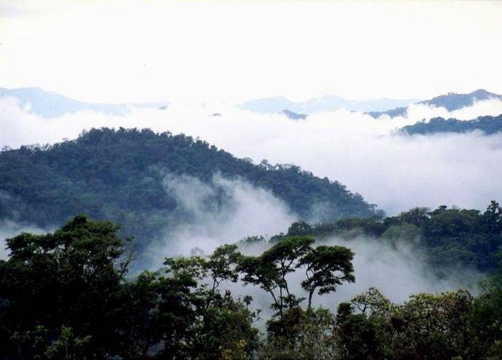 La reserva de Tariquía se caracteriza por su enorme biodiversidad. Foto del Servicio Nacional de Áreas Protegidas