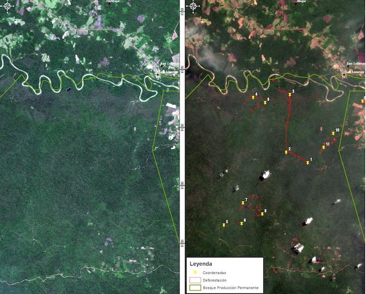 Imágenes satelitales mostraron en avance de la deforestación en solo un mes. Foto: CEVAN / FAP.