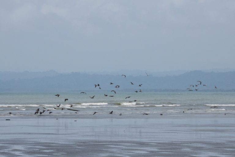 El DRMI protege 1014 hectáreas de sitios de alimentación de aves migratorias playeras. Foto: MarViva.