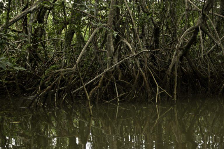 Manglares en el Distrito Regional de Manejo Integrado Golfo de Trubugá - Cabo Corrientes. Foto: MarViva.