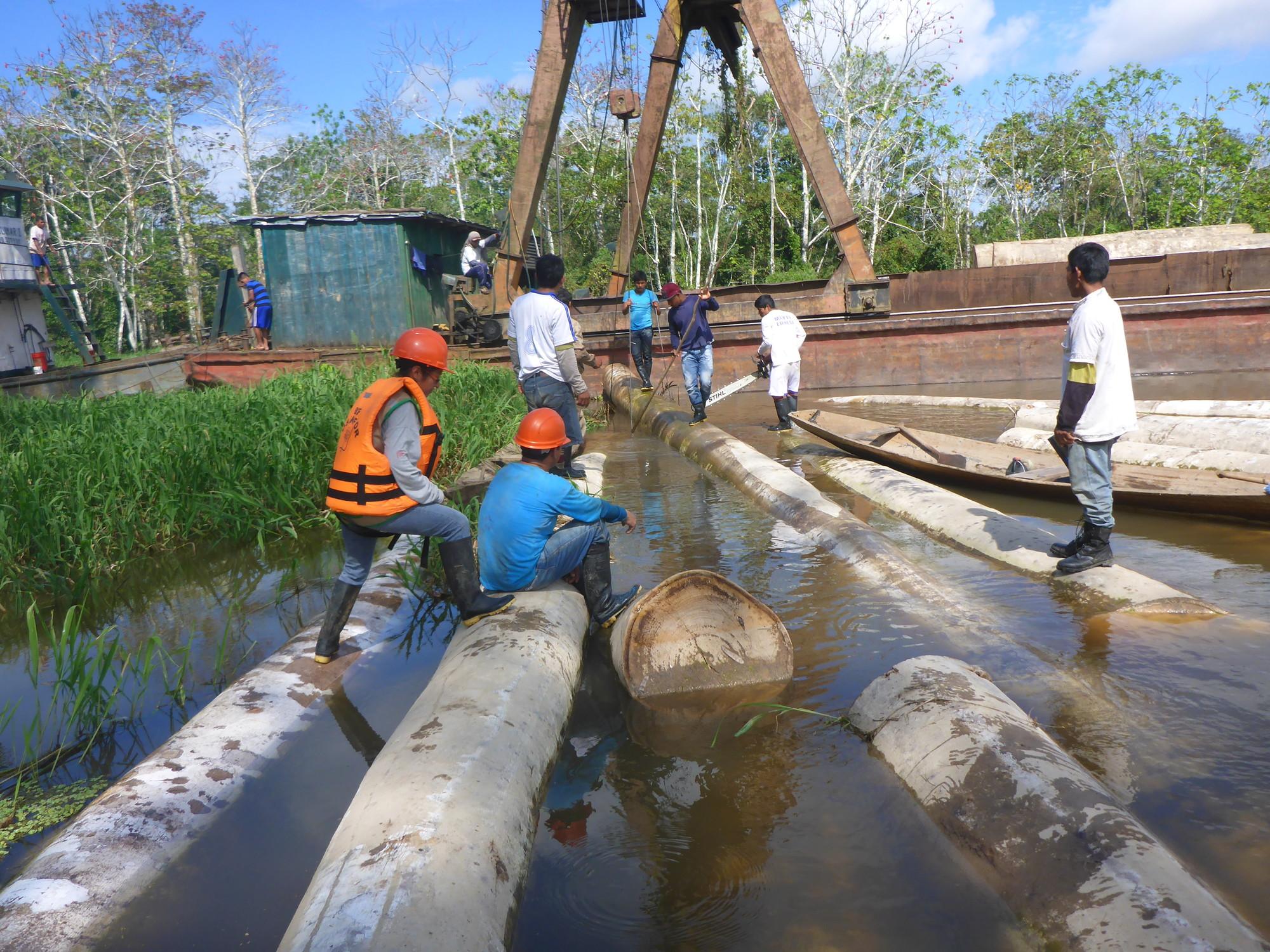 Una variedad de permisos de tala se han utilizado para blanquear madera cuyo valor estimado es de 112 millones de dólares. Foto: Osinfor