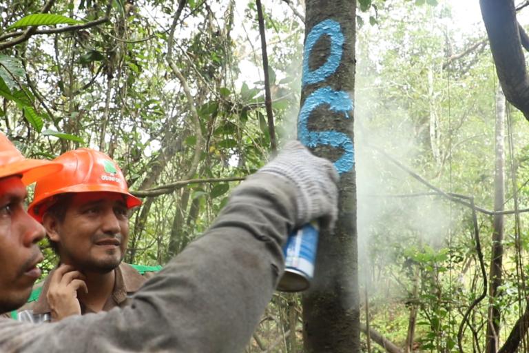 Fiscalizadores inspeccionan bosques en busca de irregularidades en la extracción de madera. Foto: Osinfor.