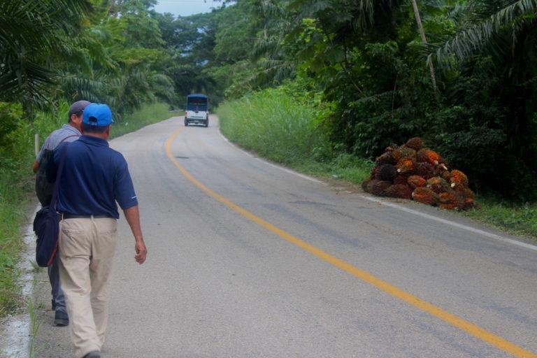 Federico Méndez y Feliciano arcos caminan en la carretera mostrando señalando los predios donde se cultiva la palma africana. Foto: Rodrigo Soberanes.