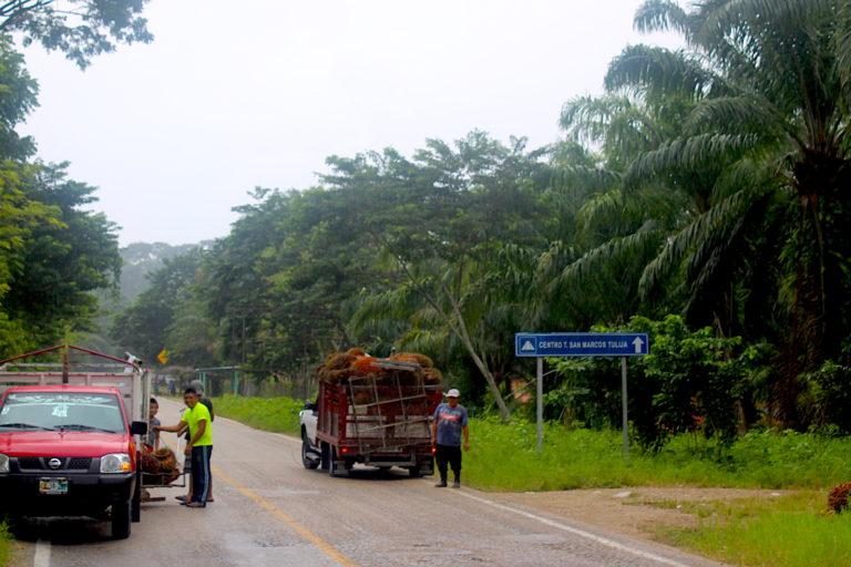 En los paisajes de la llamada Ruta Maya se ven con frecuencia a trabajadores acopiando sus cosechas de coco de palma africana. Foto: Rodrigo Soberanes.