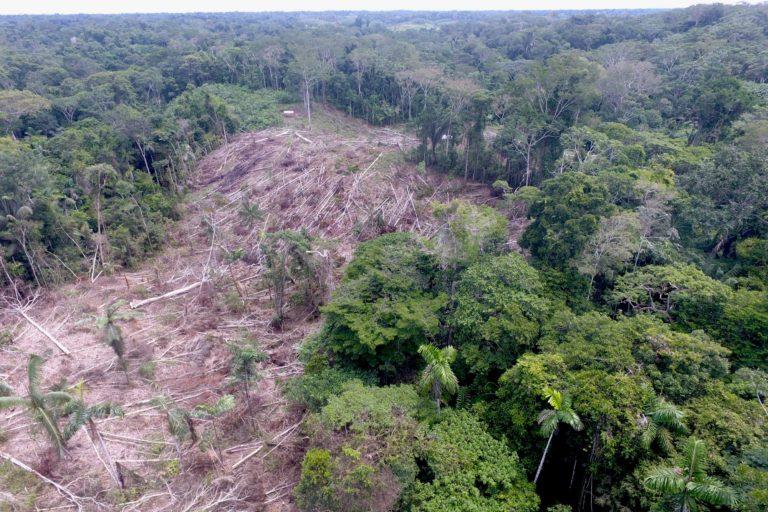Una fotografía captada con dron dentro del Bosque Macuya muestra la deforestación. Foto: Ingeniería Forestal UNU.