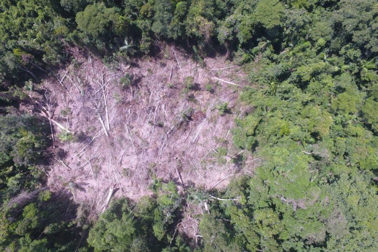 Imágenes de dron muestran la deforestación en el Bosque Macuya. Foto: Ingeniería Forestal UNU.