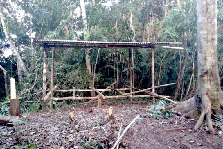 En diferentes zonas del Bosque Macuya se observan espacios deforestados. Foto: Alumnos de ingeniería forestal de la UNU.