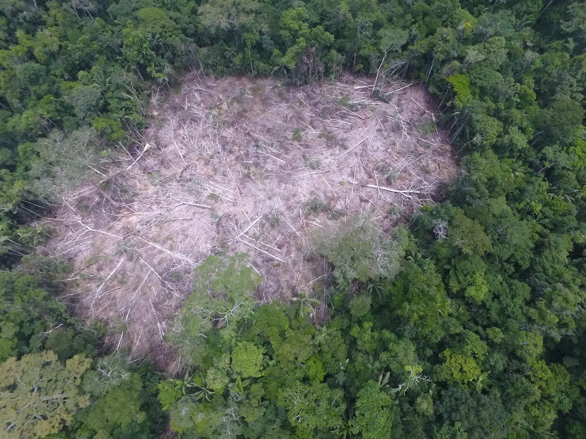 Entre 2017 y 2018 se han deforestado 335 hectáreas del bosque dedicado a la conservación e investigación. Foto: Alumnos de ingeniería forestal de la UNU.