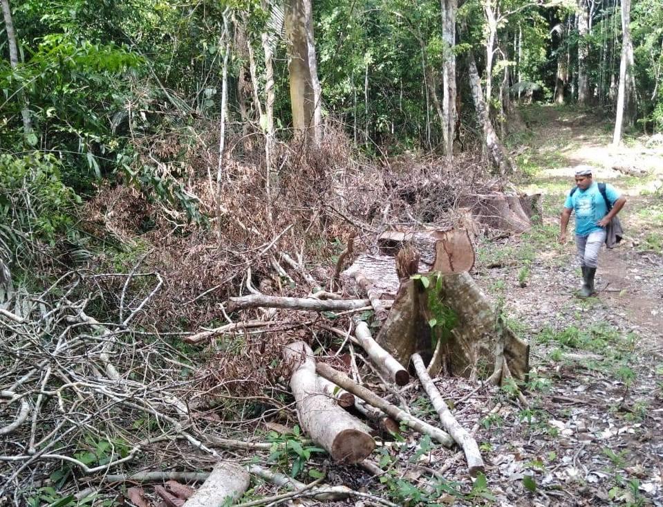 En el camino se encuentran árboles derrumbados en un bosque que alberga una gran variedad especies de flora y fauna. Foto: Alumnos de ingeniería forestal de la UNU.