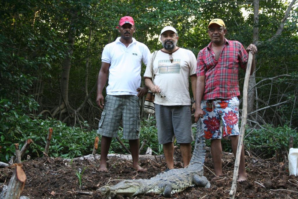 El biólogo Giovanni Ulloa (centro) junto a dos miembros de la comunidad de Cispatá en la liberación de un cocodrilo. Foto: cortesía Giovanni Andrés Ulloa.