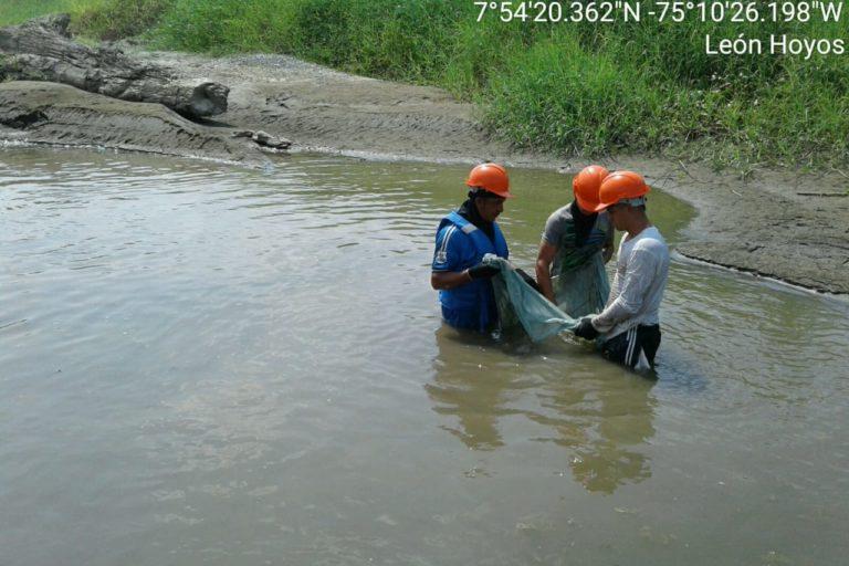 EPM capacitó a 700 pescadores para que ayuden a recolectar y llevar al agua, a aquellos peces que queden atrapados en la ribera cuando disminuya el cauce. Foto: EPM