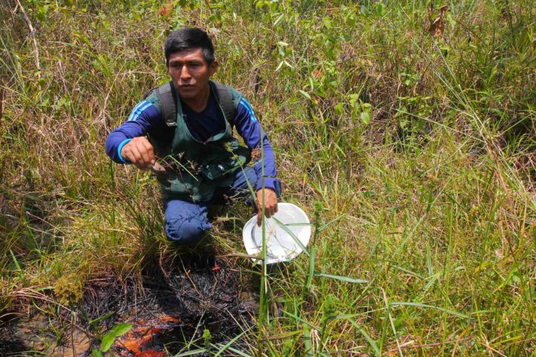 El monitor ambiental Elmer Hualinga examina un lugar donde el petróleo sale a la superficie en lo que solía ser el Lago Shanshacocha, un sitio contaminado que se drenó en lo que el estudio del PNUD llamó un esfuerzo inadecuado para la remediación. Foto: © Barbara Fraser.