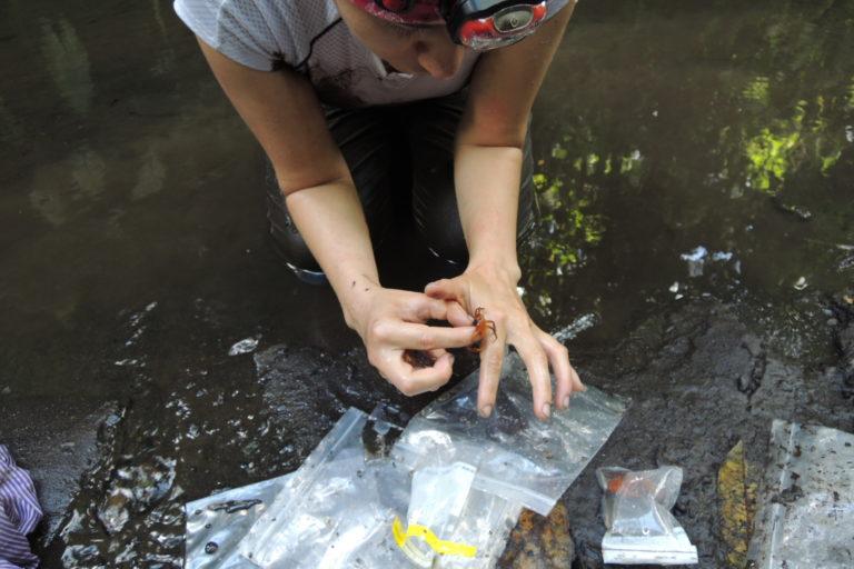 Maribel Arias en la búsqueda y recolección del cangrejo mandarina. Foto: Cortesía Maribel Arias.