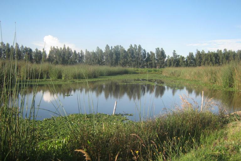 Humedal Tibanica en la localidad de Bosa, sur de Bogotá. Foto: Fundación Humedales de Bogotá.