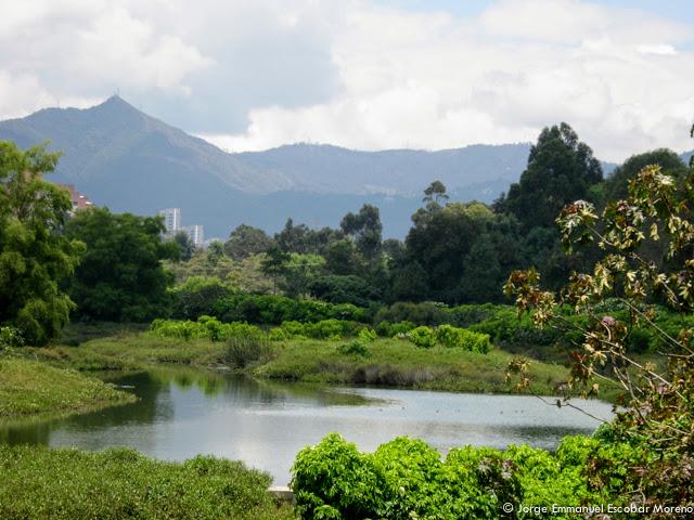 El Humedal Córdoba se ubica en la localidad de Suba. Es uno de los mejor conservados. Foto: Jorge Emmanuel Escobar / Fundación Humedales de Bogotá.