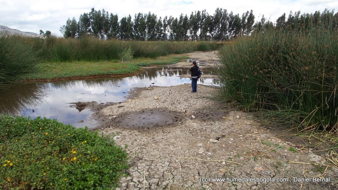 La sequía del Tibanica es un fenómeno habitual, pero aseguran que es más intenso porque no entra el suficiente caudal ecológico. Foto: Daniel Bernal / Fundación Humedales de Bogotá.