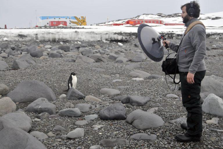 Grabar a los pinguinos es uno de los mejores recuerdos del uruguayo. Foto: Juan Pablo Culasso.