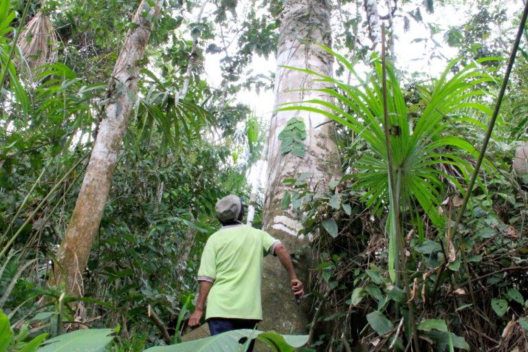 Esteban es uno de los concesionarios forestales en la zona de amortiguamiento de la Reserva Nacional Tambopata que ha sufrido la invasión de los mineros y taladores ilegales. Foto: Vanessa Romo / Mongabay Latam