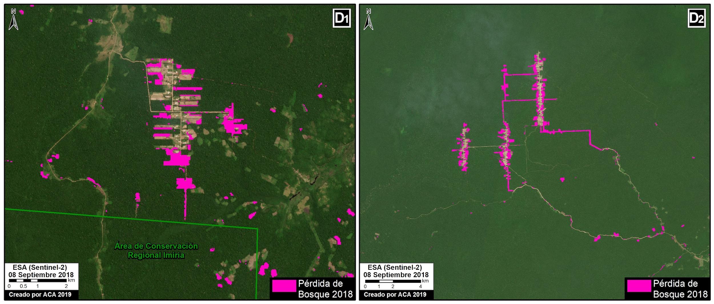 La deforestación en Masisea, Ucayali y Sarayacu, Loreto avance alrededor de carreteras de penetración. Imagen: MAAP / ACCA.