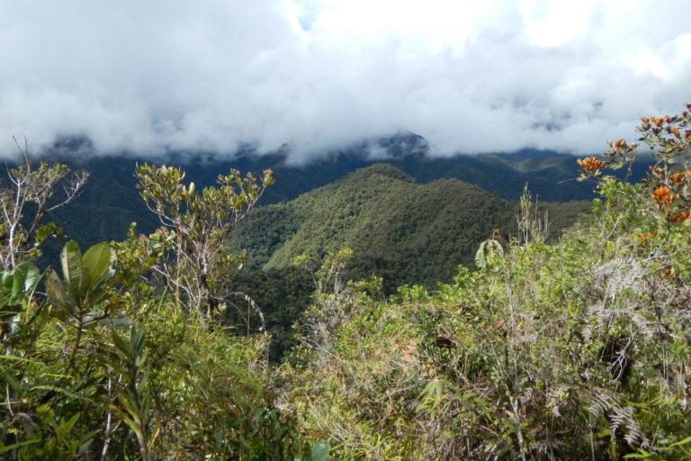 Vista panorámica del Bosque de Protección Pui Pui. Foto: Edgar Lehr.