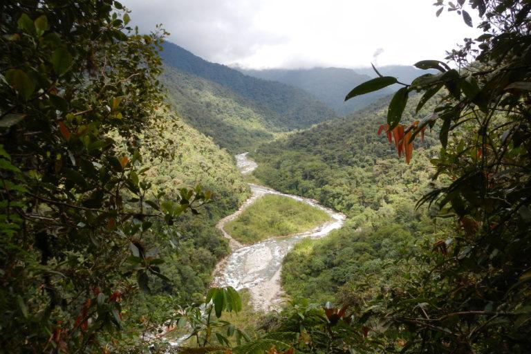 Vista panorámica del bosque nublado en Pui Pui. Foto: Edgar Lehr.