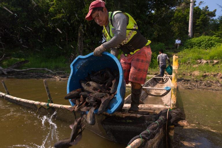 Estudios científicos señalan posibles efectos negativos del dragado en la biodiversidad de los ríos. Foto: DAR.