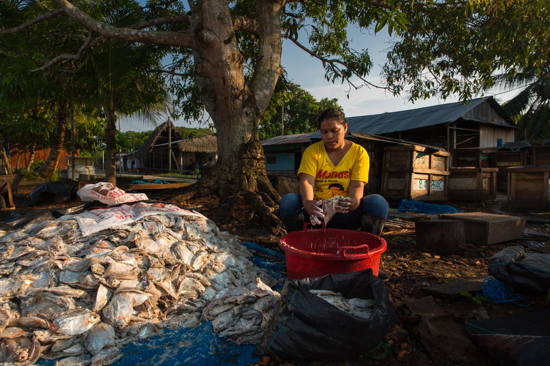 En San Carlos, un pueblo de Loreto se preparan las palometas para enviar a Pucallpa. Foto: Diego Pérez - WCS.