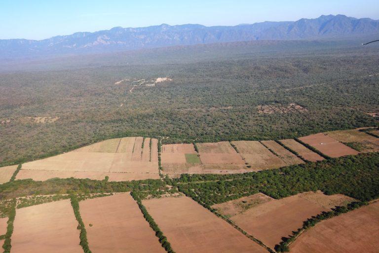 Grandes extensiones de tierra son destinados a los monocultivos en Bolivia. Foto: Archivo Mongabay Latam.