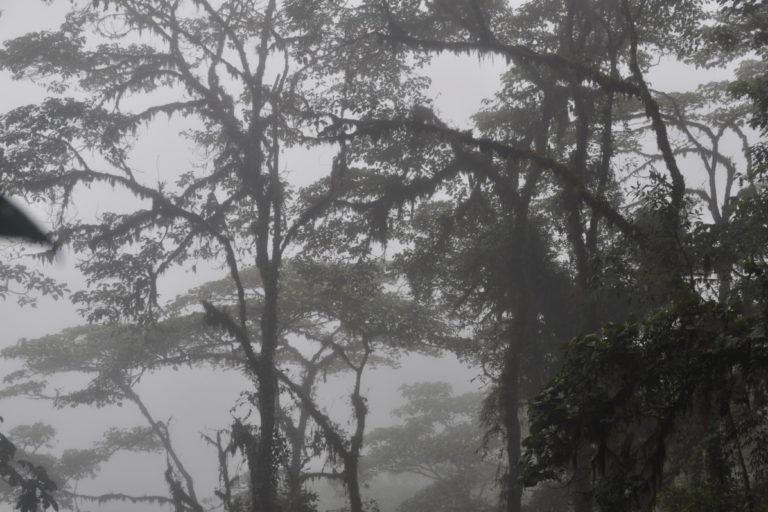 Bosque Integral Otonga de la Fundación Otonga. Foto: Fundación Otonga.