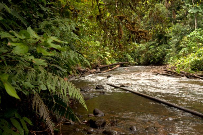 Reserva Otoyacu de la Fundación Otonga. Foto: Fundación Otonga.
