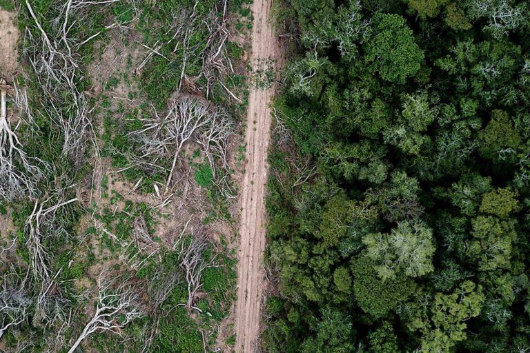 Vista de dron del bosque de Chiquitano recientemente deforestado en el borde de la Amazonía boliviana para la producción de soya. Foto de Rhett A. Butler para Mongabay