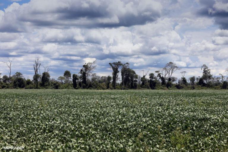 La adjudicación de tierras para uso agrícola se destina a los cultivos de soya en Bolivia. Foto por Rhett A. Butler para Mongabay